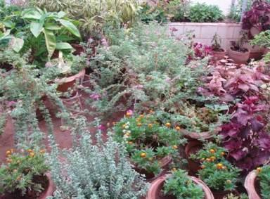 Flowering plants in terrace garden