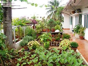 Full view of my terrace garden