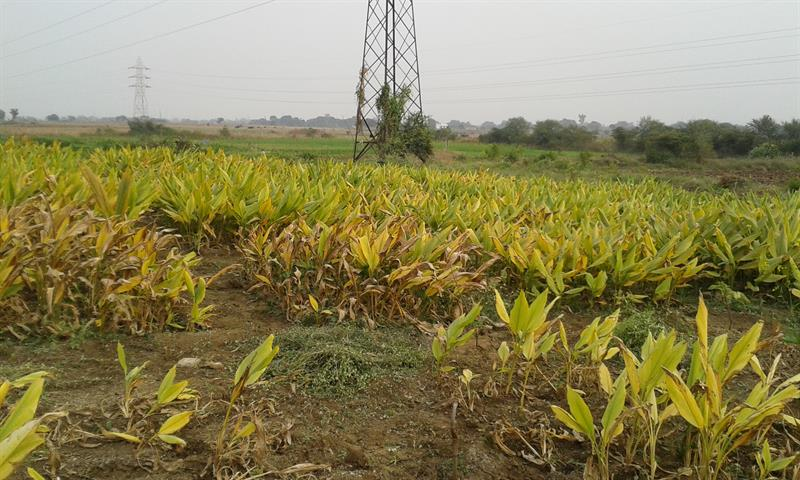 Farming Field in AKSU