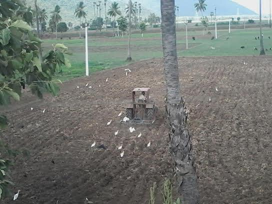 A farmer ploughing his field in a rural area of Rajhamundry