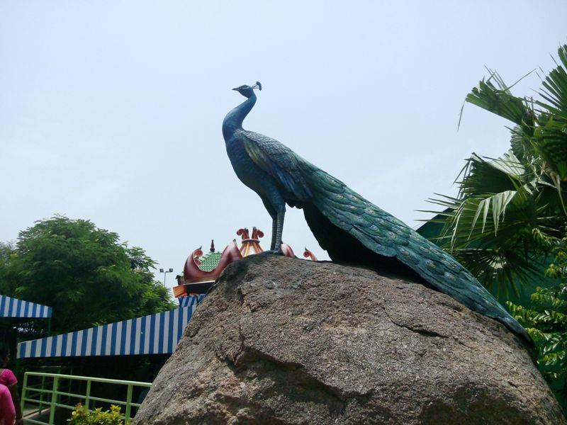 Wings, The Bird Park at Ramoji Film City, Hyderabad
