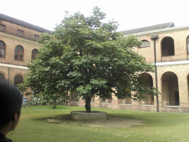 Lets Look Inside Forest research institute of India and its Corridors