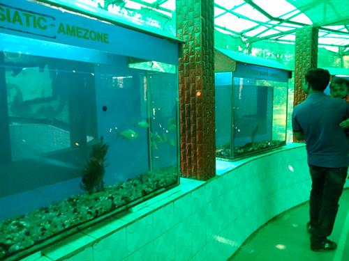 Aquarium at Saputara