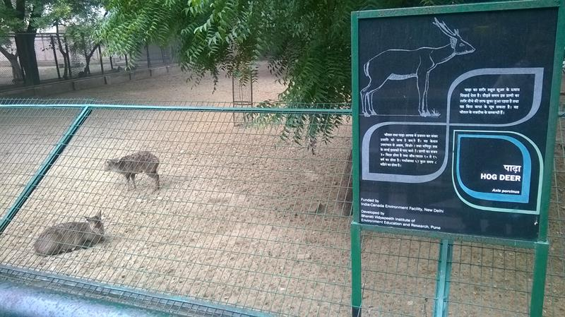 Lucknow Zoo inside