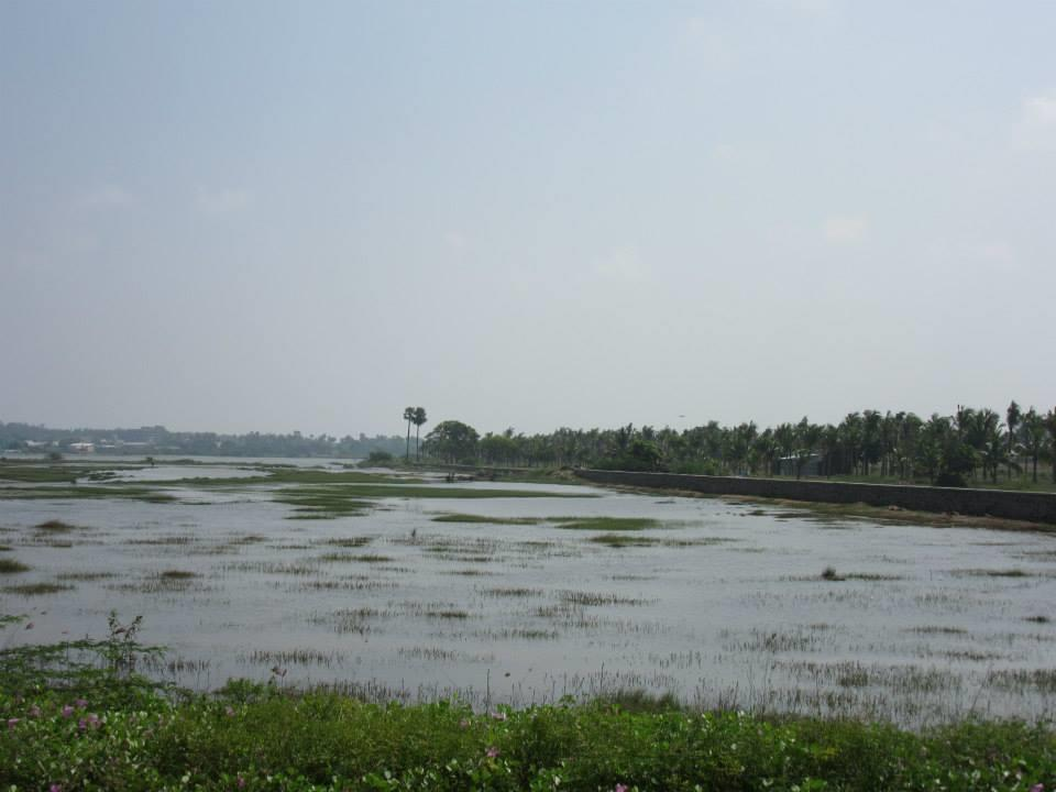 Backwaters near Mahaballipuram