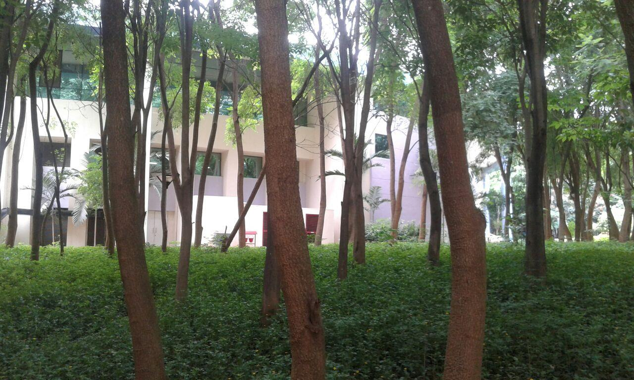 Greenery around Wipro Campus, Bangalore