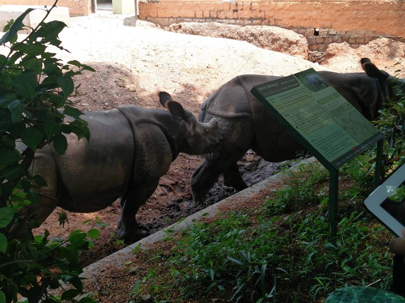 Rhinoceros at Sri ChammaRajendra Zoological Gardens, Mysore