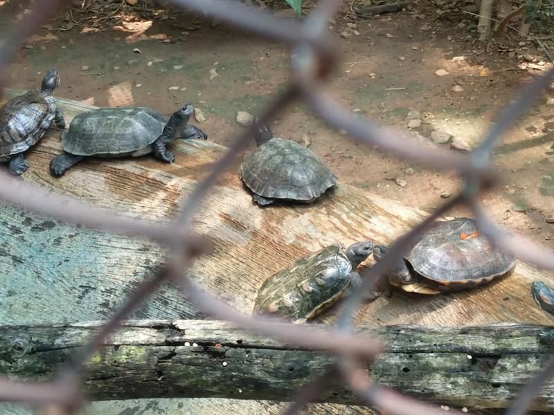 Tortoises at Sri Chamarajendra Zoological Garden,Mysore
