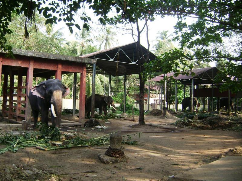 Punnathurkotta Guruvayur Elephant Sanctuary, Kerala