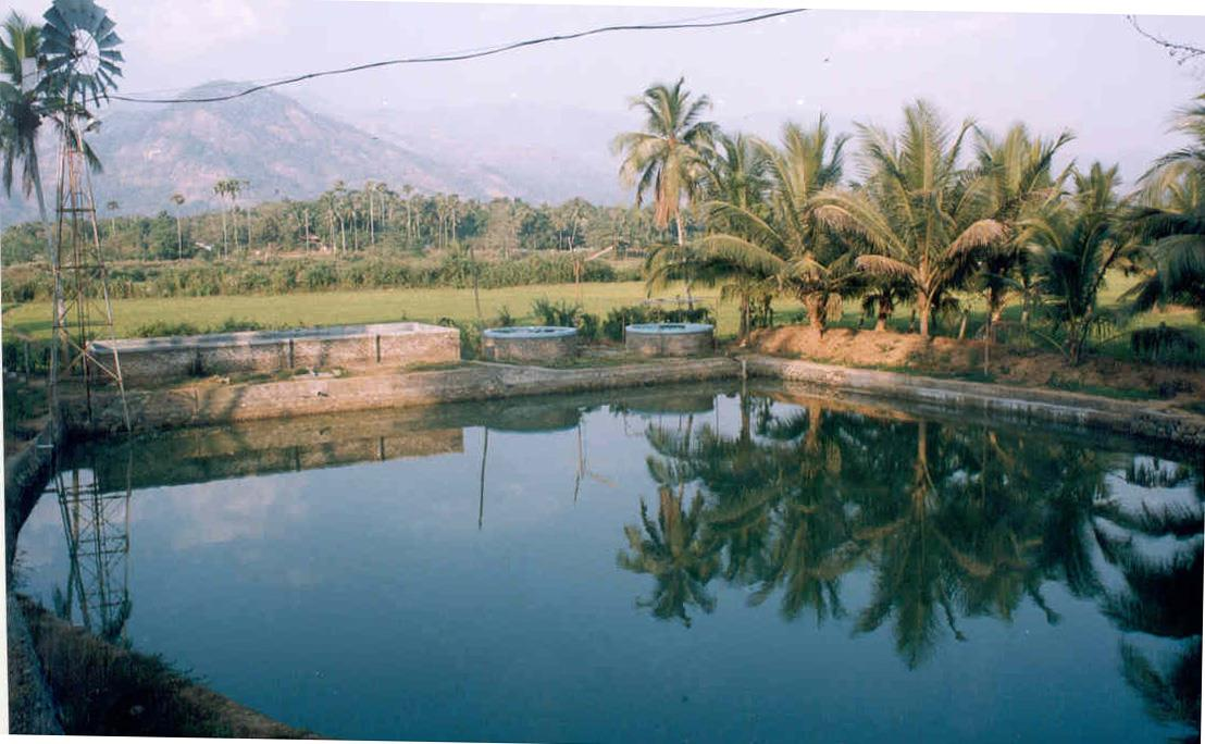 A beautiful pond in a rural background !