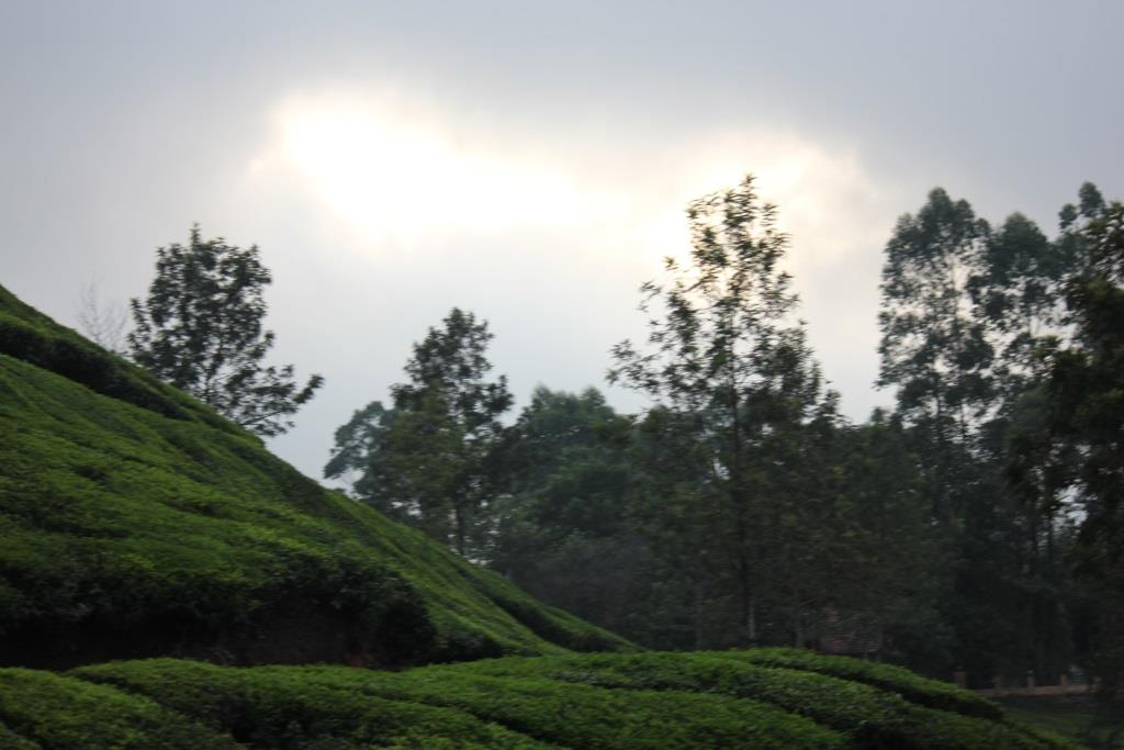 Beautiful sunset in Munnar hill station
