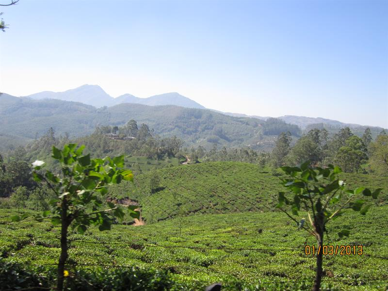 Tea estates and the mountains of Munnar