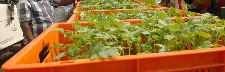 High tech agriculture and Kitchen gardening