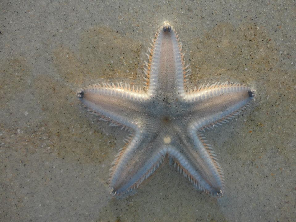 Starfish at Varca beach