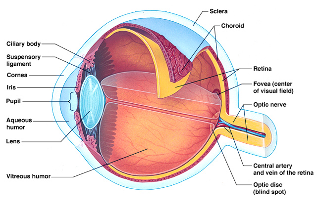 Basic information about Glaucoma
