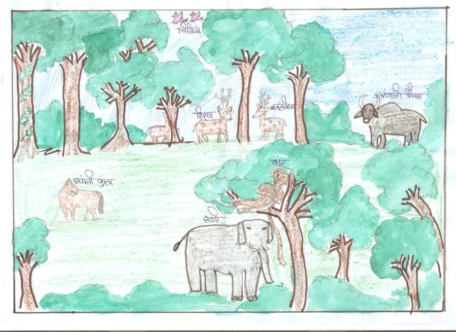 essay on importance of forest conservation Free sample essay on the importance of forest conservation the birth and growth of human civilization and culture has been very intimately connected with the forests.