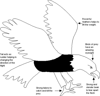 A simple diagram of an eagle.