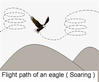 Flight path of an eagle