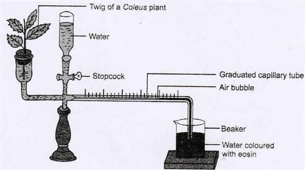 Ganongs Potometer experiment