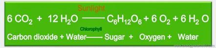 Photosynthesis overall balanced chemical reaction