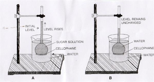 Demonstration of osmosis process