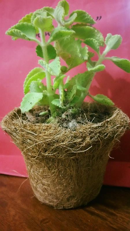Gardening workshops for children in chennai plant sapling in a coco peat pot solutioingenieria Image collections