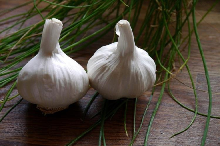 Health Benefits of Garlic .