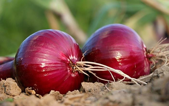Medicinal Value of Onion .