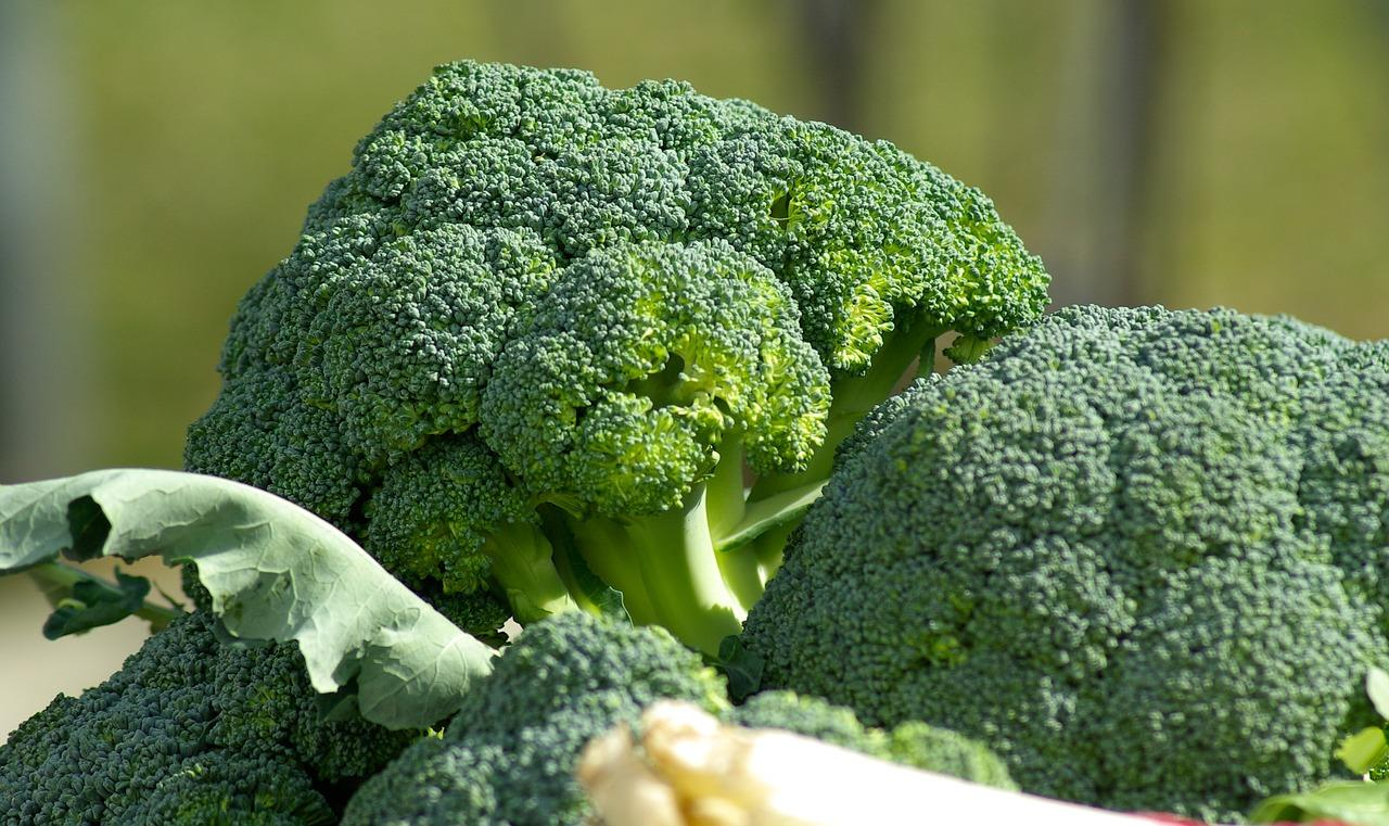 Medicinal Values of Broccoli - Health Benefits of Broccoli