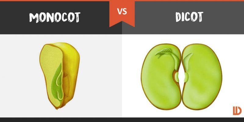 How Will You Distinguish Between Dicot Plants And Monocot