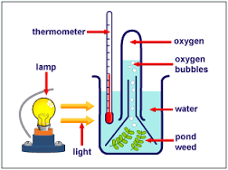 an analysis of the laboratory experiment on photosynthesis in biology Ia analysis this criterion assesses the extent to which the student's report provides evidence that the student has selected, recorded, processed and interpreted the data in ways that are relevant to the research question and can support a conclusion.