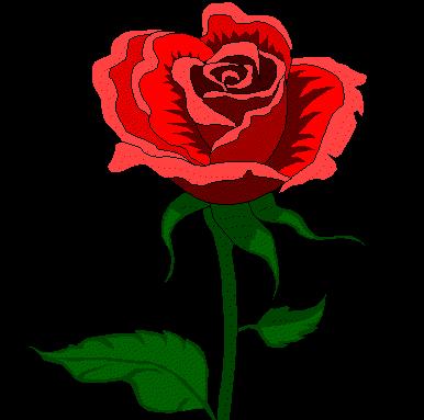 Flower Shop Online on Gift Shop Flower Gift Name Flower