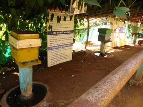 Beehives at Honey Bee Center in Saputara