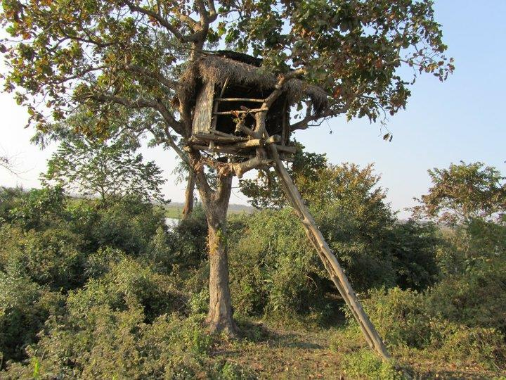 A watch tower inside Kaziranga reserve