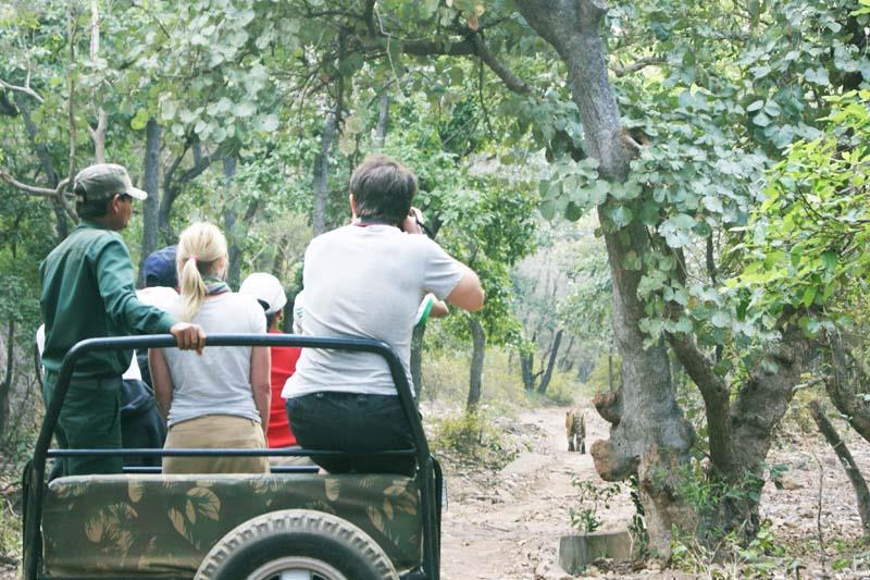 jungle safari wayanad