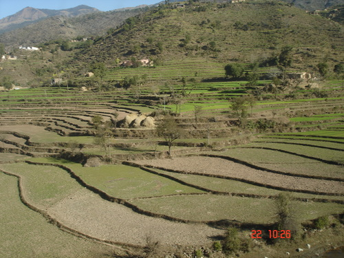 write an essay on jhum cultivation in arunachal pradesh using the register of agriculture