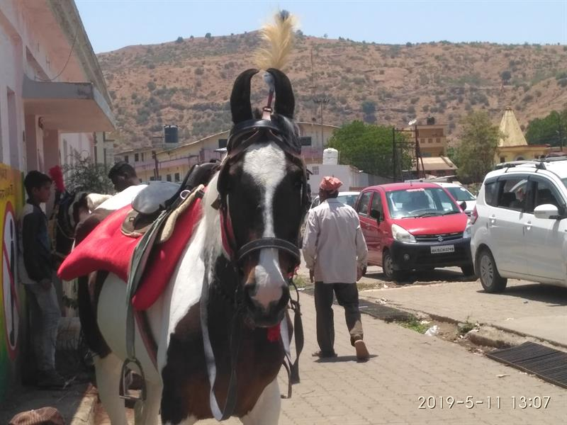 Horse is ready for tourists ride in Triambakeswar, Nashik