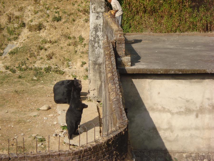 Gopalpur Zoo Himachal Pradesh Visit