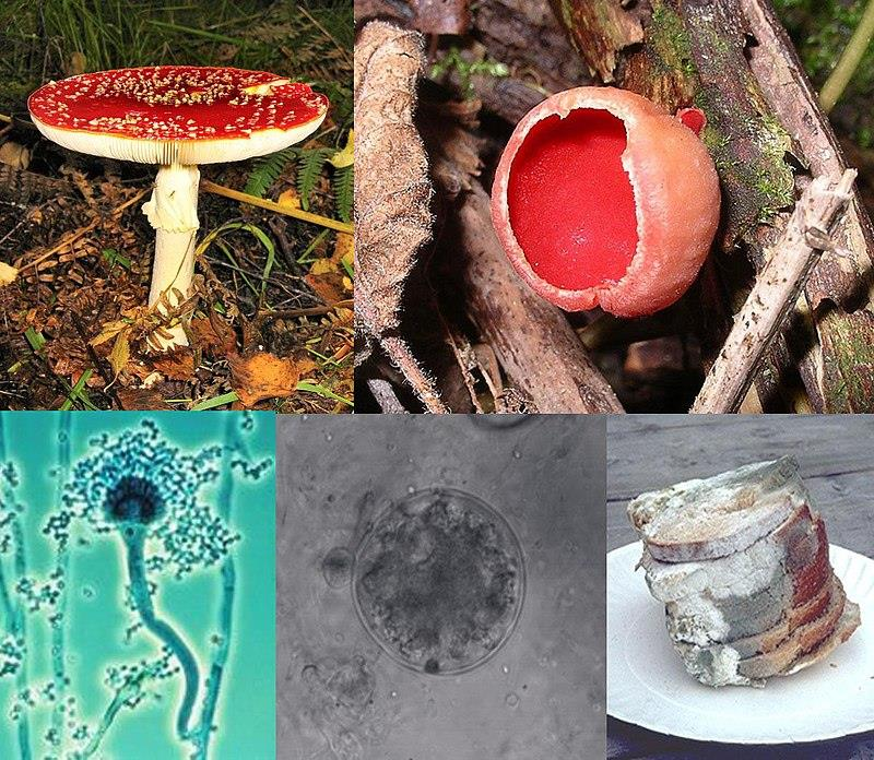 Different types of Fungi